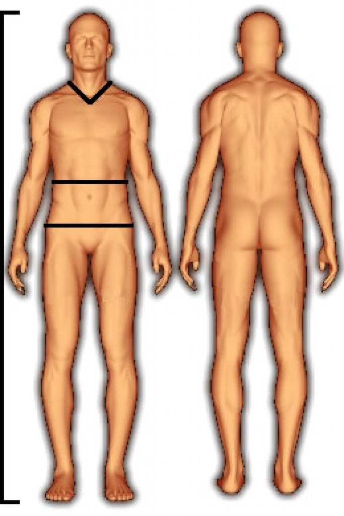 body_fat_us_navy_female-1-683x1024