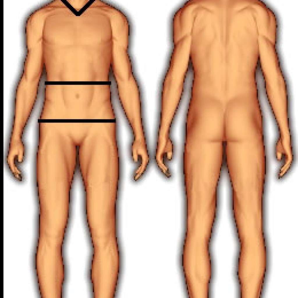 body_fat_us_navy_female-1024x1024