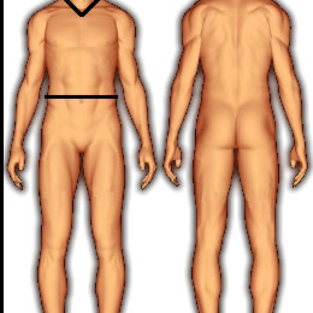 body_fat_us_navy_male-1024x1024