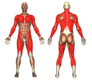boxsack das ideale fitnessgerät