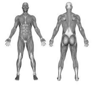 Diese Muskeln werden am Boxsack beansprucht