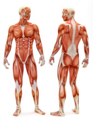 low fat diät ist kein testosteronbooster