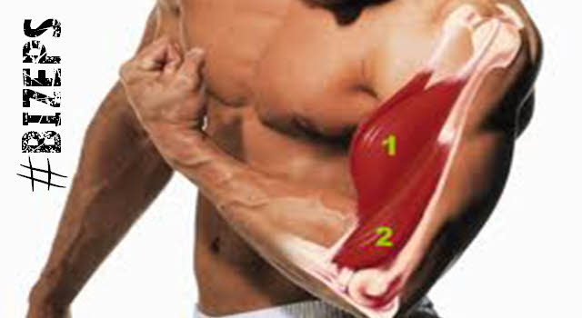 bizeps und brachialis training mit pump