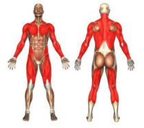 schnell-abnehmen-tipps-muskelaufbau
